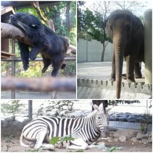 Animals at Manila Zoo Photo by Hitokirihoshi