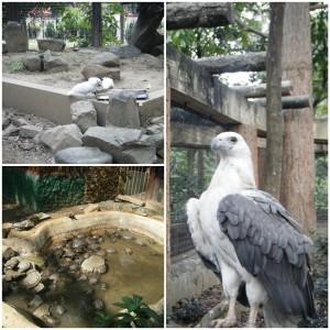 Animals at Nino Aquino Parks and Wild Life (photo by Hitokirihoshi)