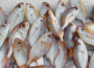 ighting Illegal Fishing