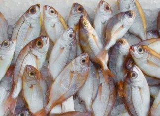 ighting Illegal Fishing