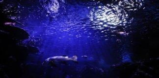 reef ocean