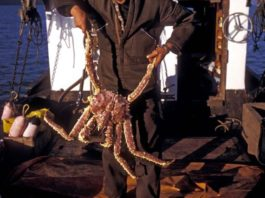 King Crab Fishing in 2020 (step by step)