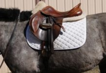 Affordable Saddle Pads For Sale That Are Perfect For Any Horse